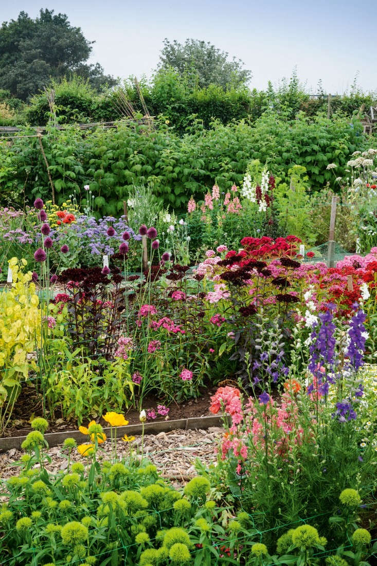 Practice british council ielts reading tests with answer. Required Reading: The Cut Flower Patch: Gardenista