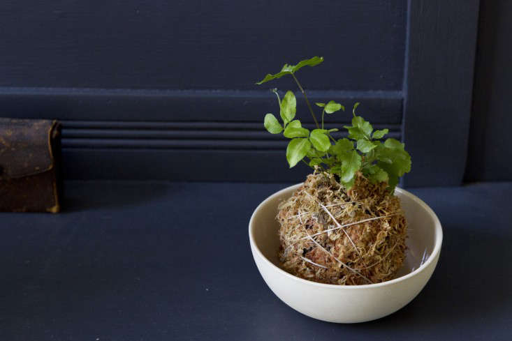 Kokedama String Balls A DIY Hanging Garden  Gardenista