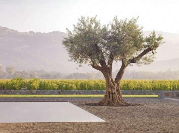 simple landscaping ideas 10 genius
