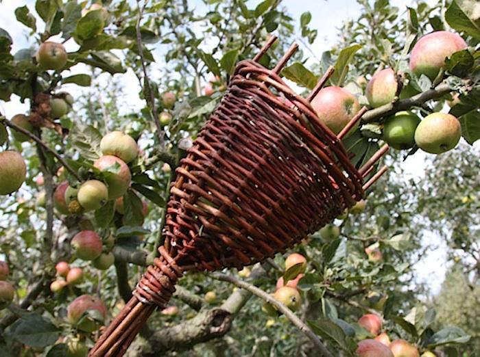 Willow Fruit Picker Gardenista