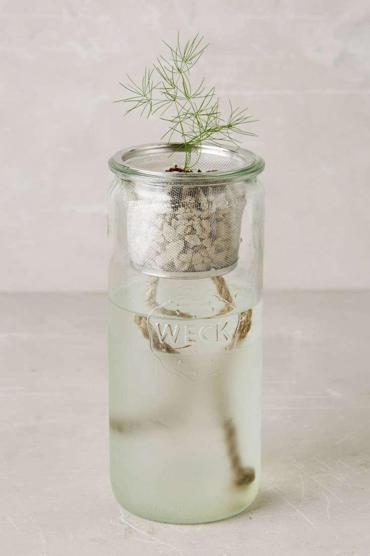 Small Space Gardening A Kit to Grow Windowsill Herbs
