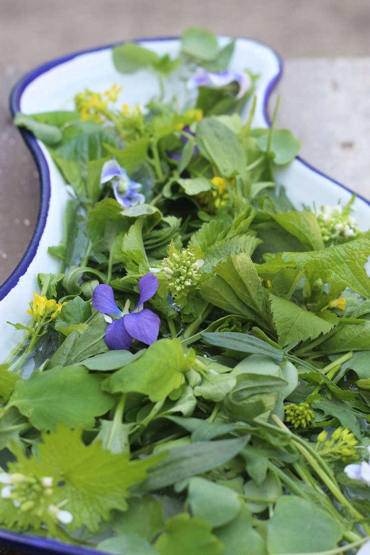 Salade forte d'herbes sauvages par Marie Viljoen