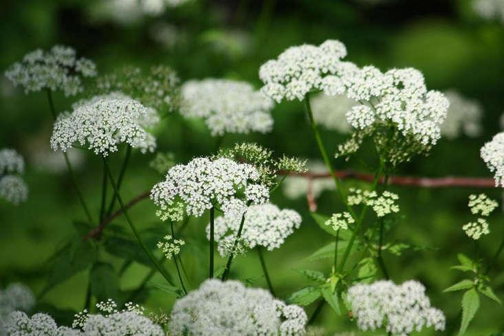 Fleurs anciennes au début de l'été par Marie Viljoen