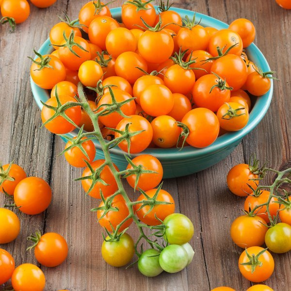 best-tomatoes-to-grow-in-a-container_3