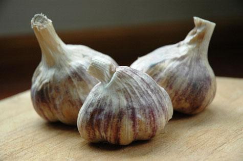 how-to-grow-garlic-indoors_3