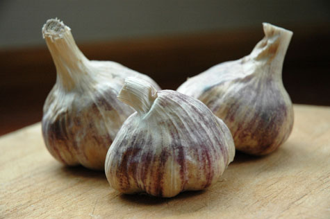 how-to-grow-garlic-indoors_3