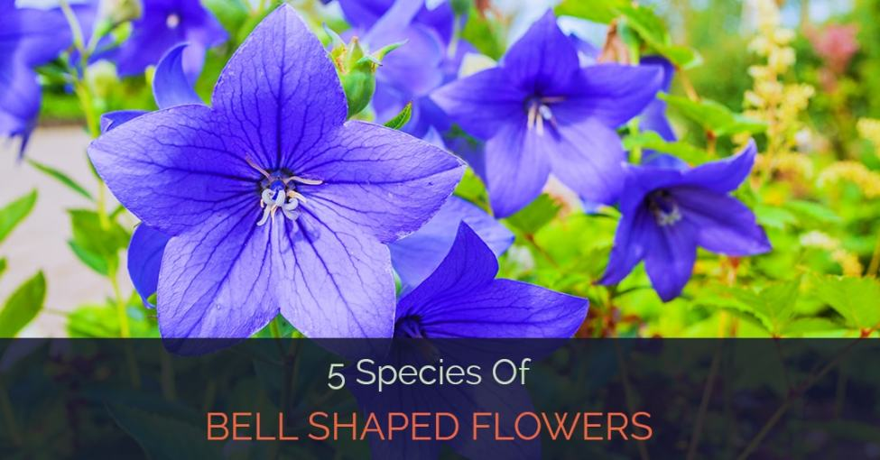 5 species of bell shaped flowers bell shaped flowers mightylinksfo