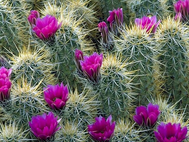 indoor-cactus-types-5