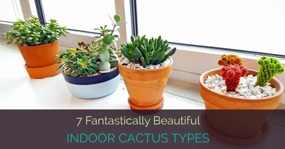 indoor-cactus-types
