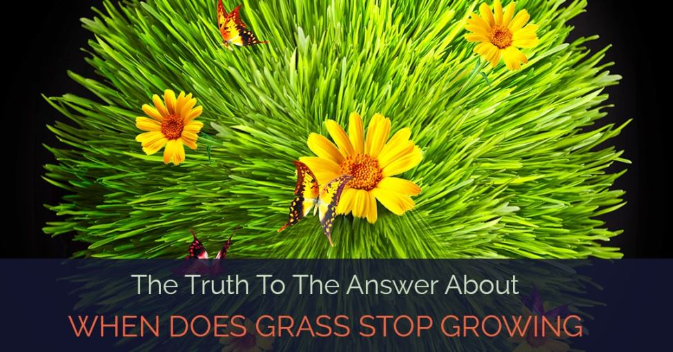 when-does-grass-stop-growing
