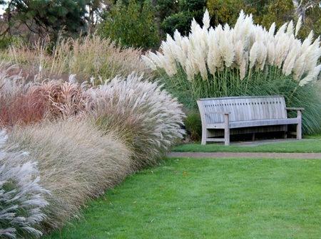 maiden-grass-make-patios