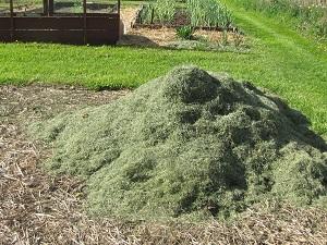 natural-fertilizer-grass-clippings
