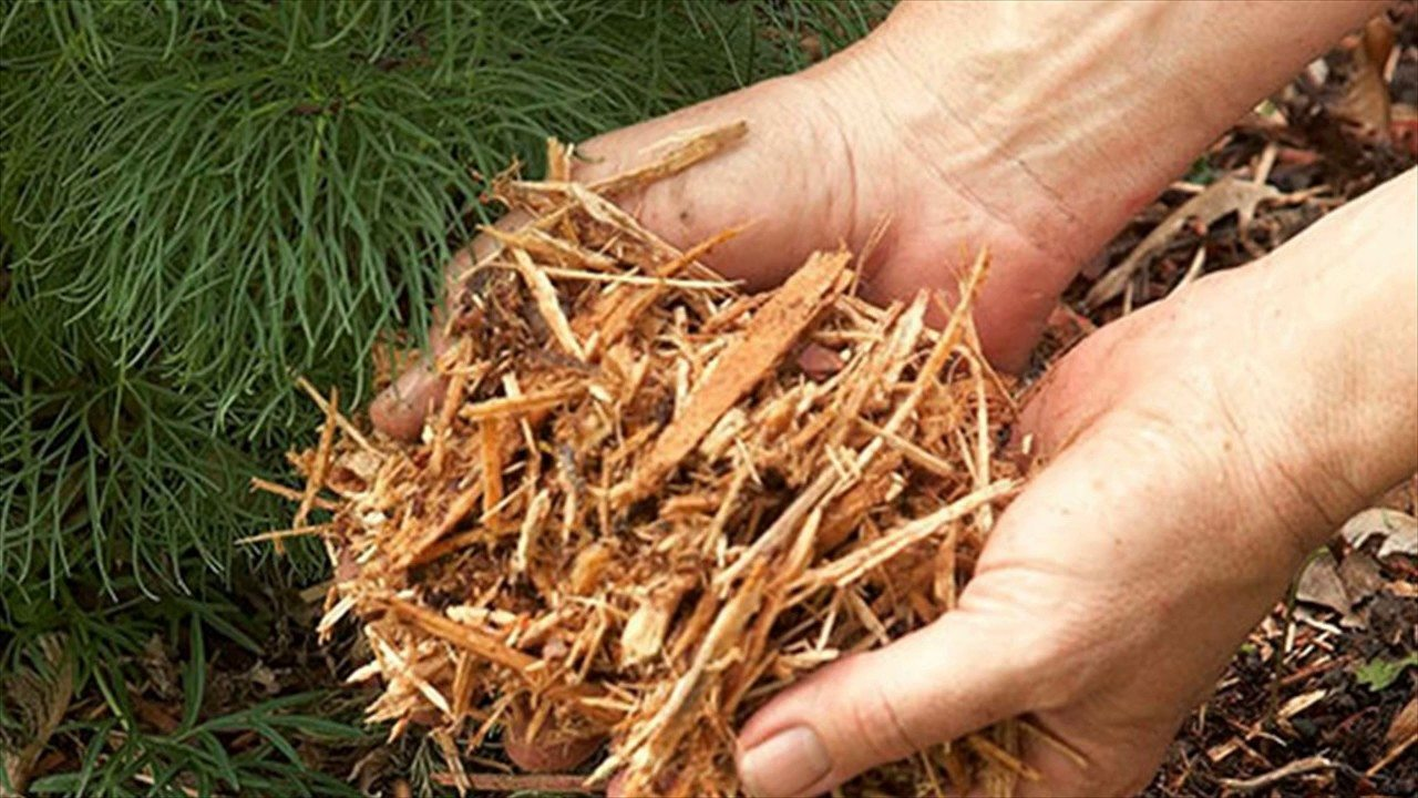 pine-needles-as-natural-fertilizer