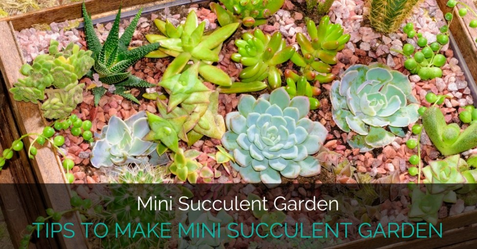 tips to make a mini succulent garden