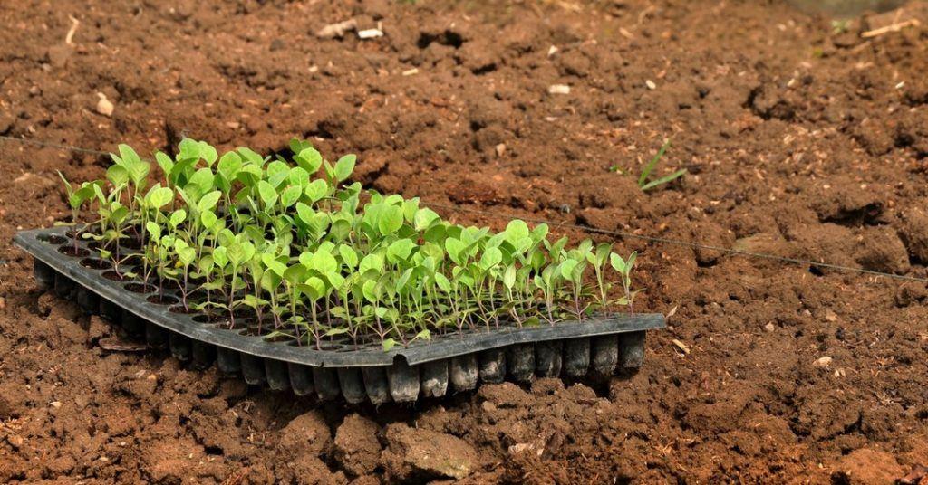 planting-in-zone-5-1