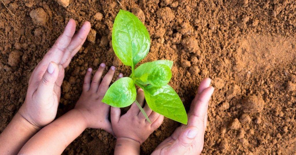 planting-in-zone-5-2