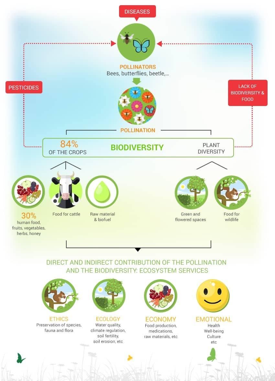 biodiversity-bees