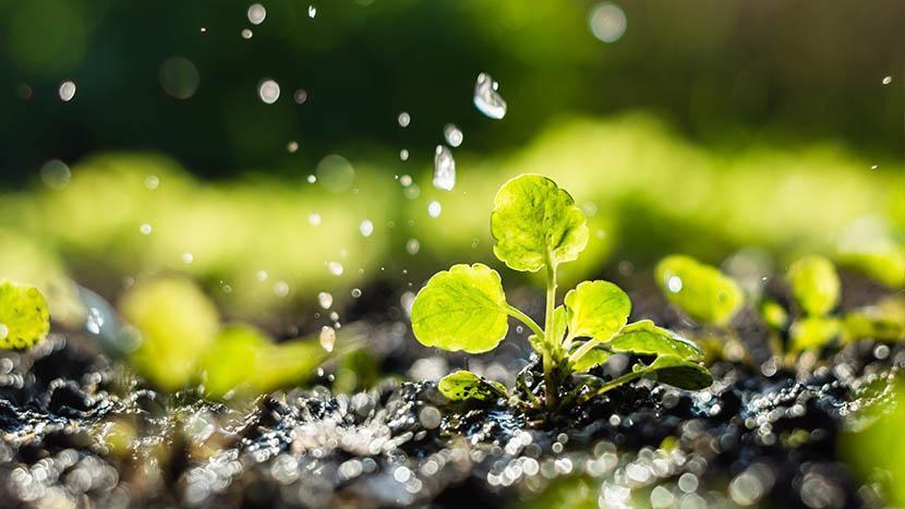 Overwatering Plants