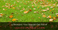 4  Reasons You Should Get Rid of Leaves On Your Lawn
