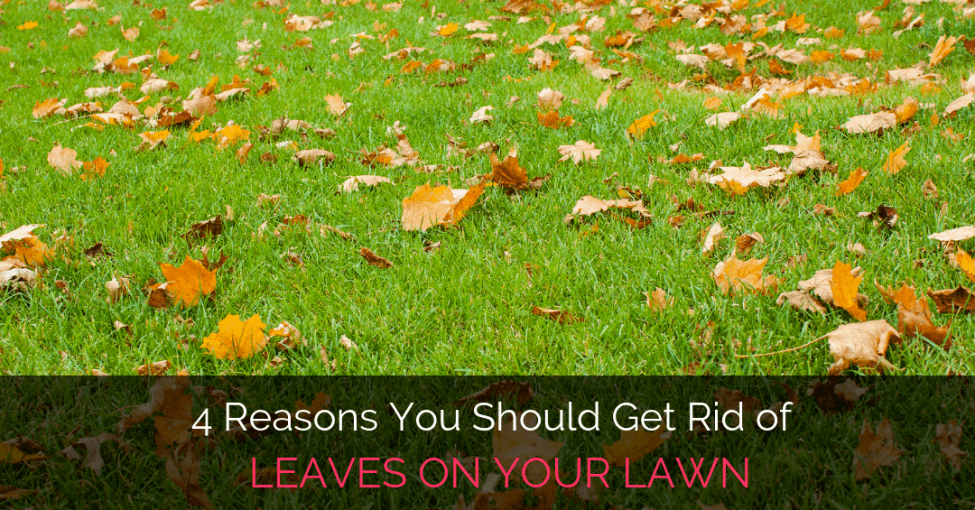 get-rid-of-leaves-on-lawn