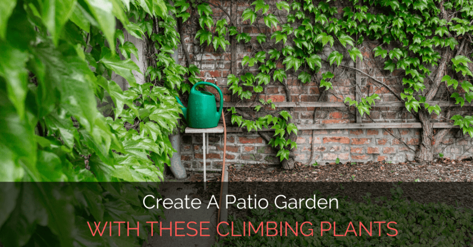 patio-garden-with-climbing-plants