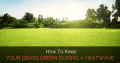 How To Keep Your Grass Green During A Heatwave