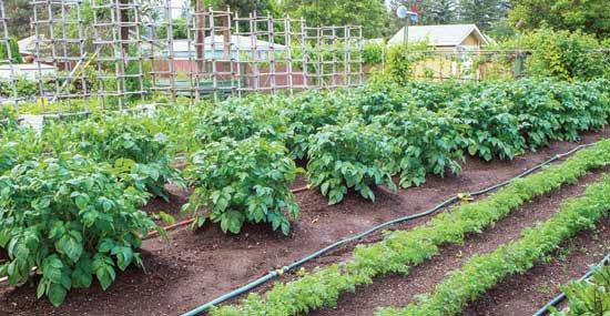 watering-solutions-in-garden