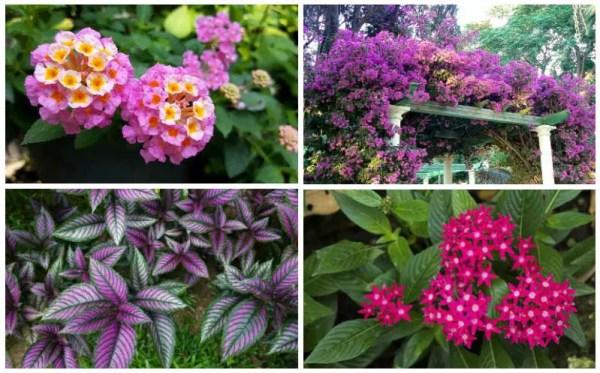 perfect florida perennials