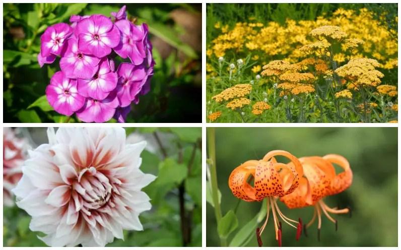 15 Perennials That Grow In Zone 8 Garden Lovers Club