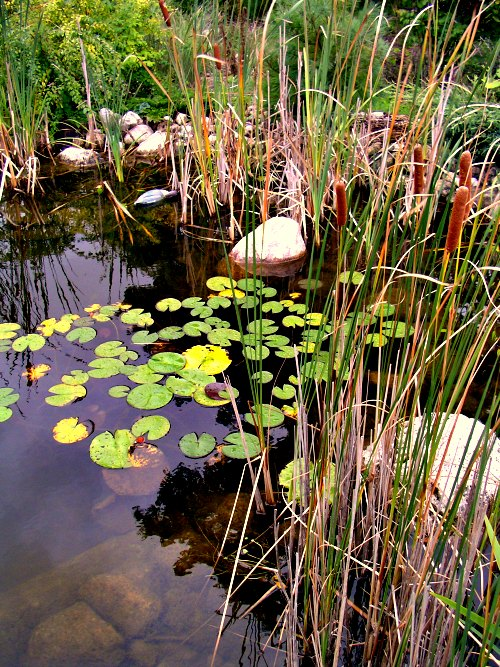 how to build a garden pond without a pump - boisholz,