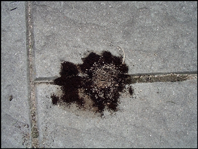 Kill Ants In Your Yard