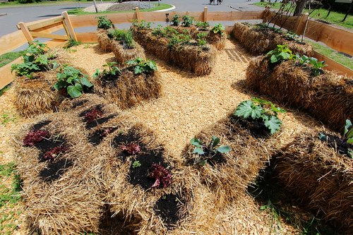 Straw Bale Gardening Pros And Cons Garden Myths