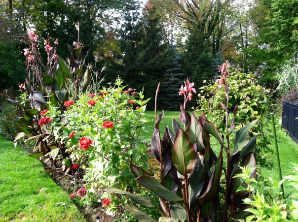 Cannas and zinnias