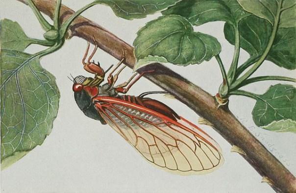 Wikipedia Devils Parakeet