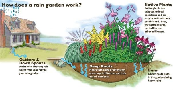 Image BHow-Rain-Garden-works4