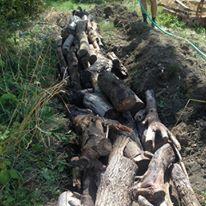 hugelkultur-big-logs