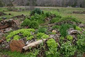hugelkultur-planting-v