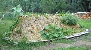 hugelkultur-plantings