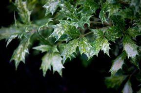 Carnation-13_web