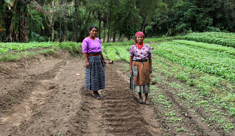 Our programs support women farmers.