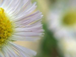 Dreamy flower in a new garden