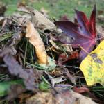 A Gift from Above: 8 Ways To Use Fall Leaves