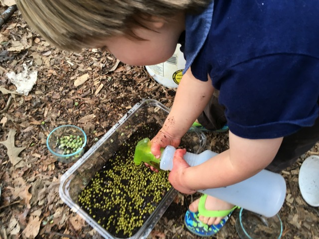 Watering in the seeds