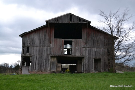 A stock barn with a front gable hay hood in the Motley community.