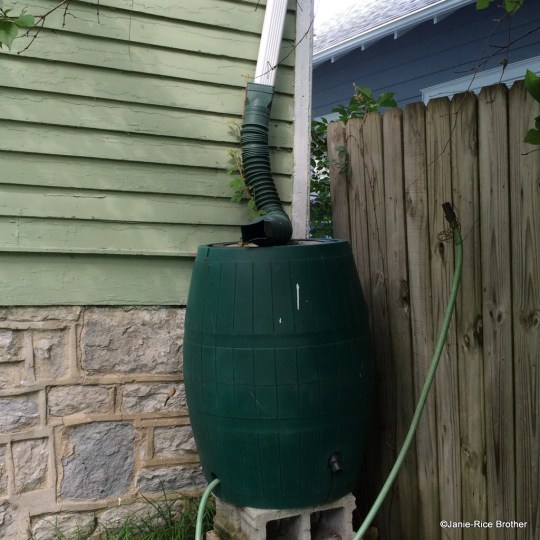 I swear by my rain barrel. This is my second one, and while this is not a product placement, I am incredibly pleased with it - got from Gardener's Supply Company.
