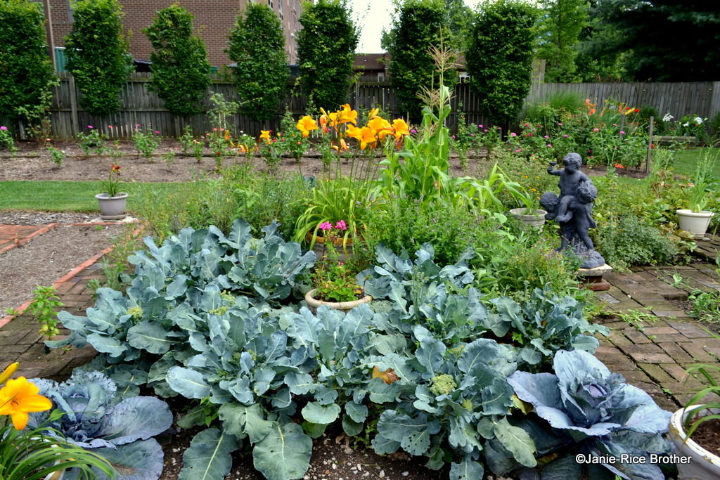 Vegetables and ornamentals share space nicely in McKeighen's ever-evolving garden.