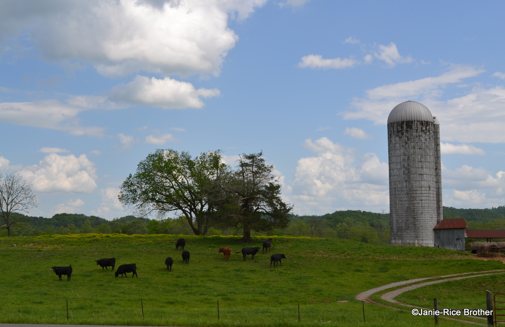 Spring, in all of its verdant glory along the Cumberland River, Russell County, Kentucky.