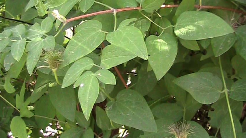 Leaf Mulch Good Garden