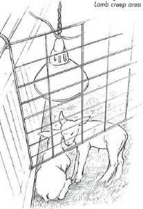 Första lammhjälpen. Del 3: Omhändertagande av nedkylda