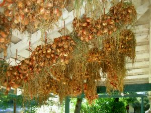 Shallots hanging from porch